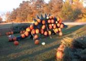 Pumpkin Dinosaur3