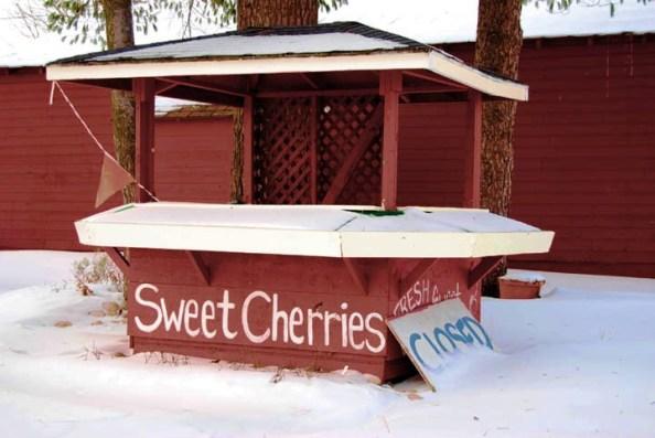 Kamp's cherry stand in snow - Katherine Berst