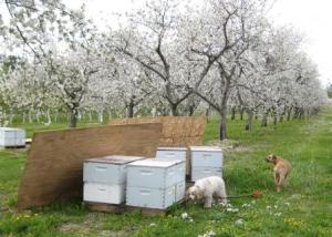 Exploring the beehives