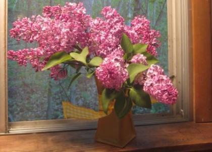 Lilacs on the kitchen windowsill2