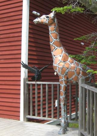 Bill Allen's giraffe and Rod Bearup's raven