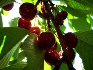 Secret cherries