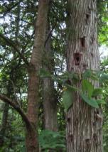 Woodpecker Works