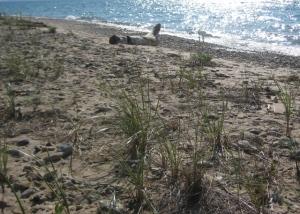Beach at TBNP