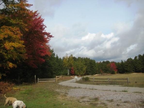 Barnes Park Easy Trail