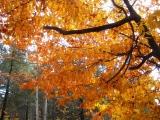 Barnes Park - October glow