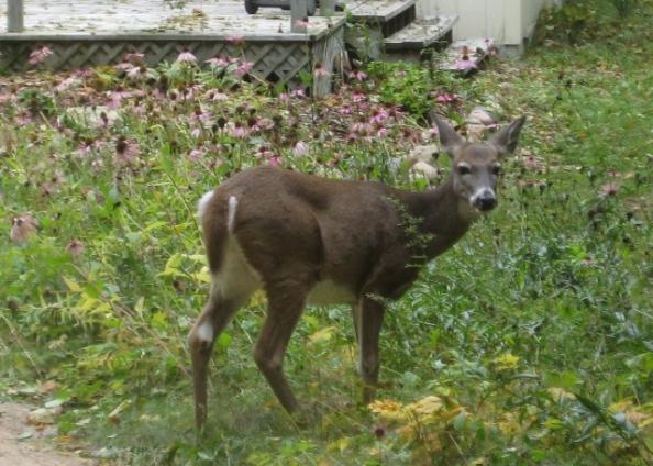 Deer statue - chewing