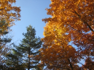 October 28 - 12:30 pm - Gold and Pine