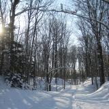 Snowy walk in the woods