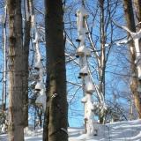 Snowbells