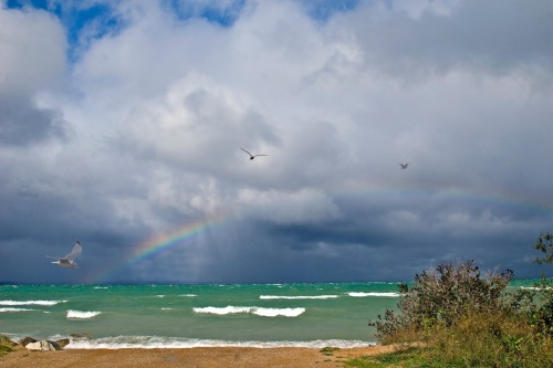 Rainbow with gulls