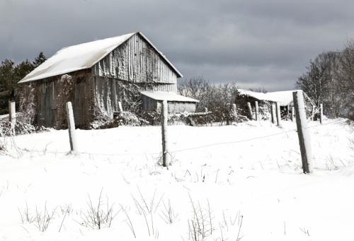 Babs - White Christmas 20121223_0117