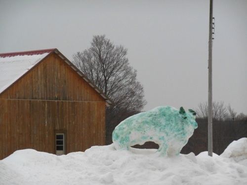 Blue Bison at Providence Farm