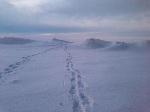 Grand Traverse Bay snowshoe trek - Bruce Laidlaw 1