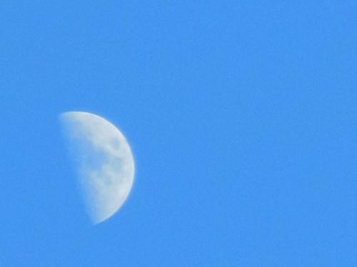 Half moon sun-bathing