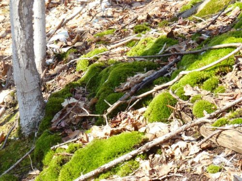 Mossy patch