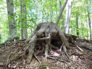 Stump creature