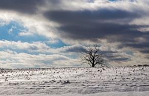 Winter - Witness tree