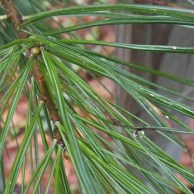 Color for Mud Season - pine needles