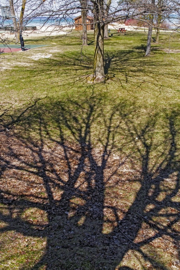 Babs Apr 17 Spring shadows