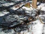 Swamp branch litter