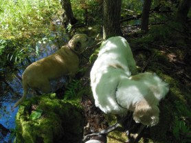Miss Sadie and the Cowboy on the alert in the Swamp